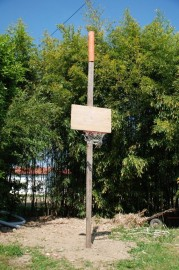 Basket Everywhere