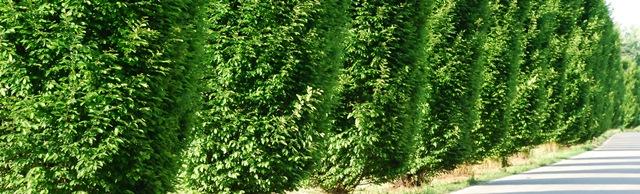 Verde, come il filare di alberi che si affacciano in strada