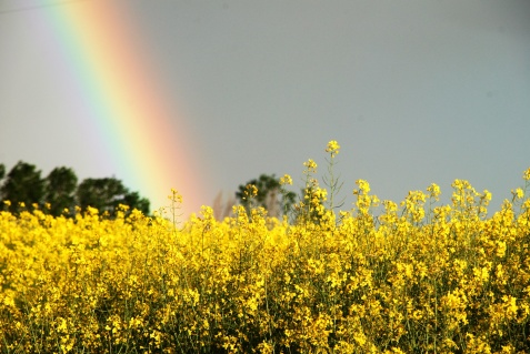 Flowers in the rainbow