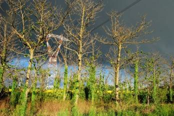 Un albero diverso...