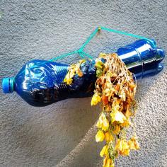 Bologna - Bottiglia
