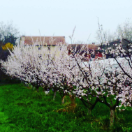 Scaldaferro - Fiori per frutti