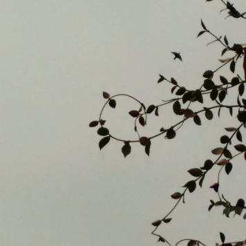 Spinea - Volo tra le foglie