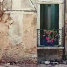 Urban still life: door, violets and dead ivy.