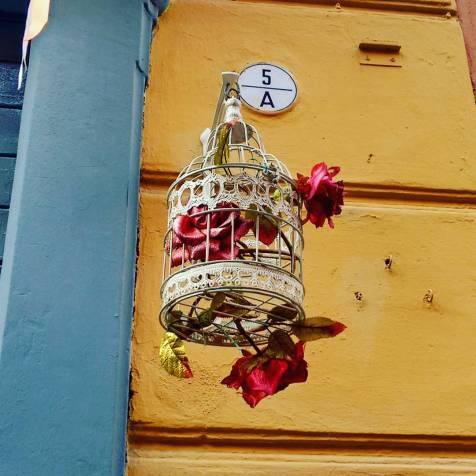Bologna - Grace in cage.