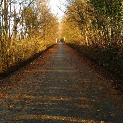 Spinea - Autumn path.